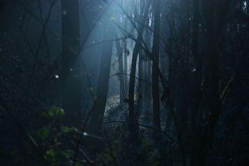 dark-1936954__480