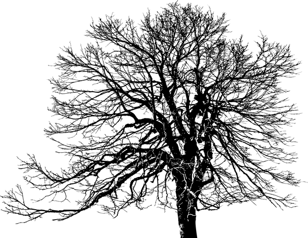 tree-3176813__480